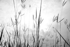 Grass of the field. Black and white grass of the field. And the sky or the dark Royalty Free Stock Images
