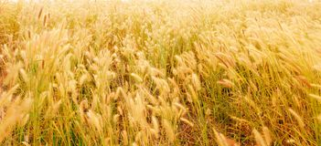 Grass field Royalty Free Stock Images