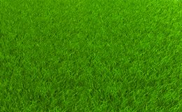 Grass field Stock Photos