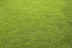 Free Grass Field Royalty Free Stock Photos - 25858958