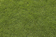 Grass Field Stock Photography