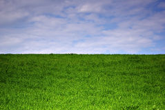 Grass Field. Meadow landscape at sunny summer day, fresh green grass and cloudy sky Royalty Free Stock Photo