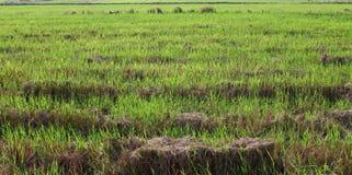 A grass field. Royalty Free Stock Photos