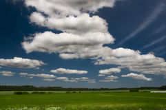 Grass field. Typical summer view in Latvia royalty free stock image