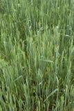 Grass field 3 Stock Photos