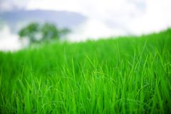 Grass field Stock Image