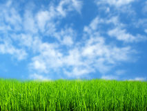 Grass field. With blue sky stock images