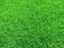 Grass field. Stock Photography