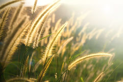 Grass field in afternoon Stock Photography