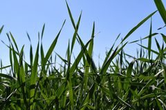 Grass field, Agricultural landscape in the summer time stock photo