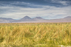 Grass field. In the Atacama desert, Chile Royalty Free Stock Photography
