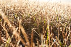 Grass of the field Royalty Free Stock Photos