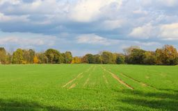 Grass field with autumn trees and cloud sky. Czech landscape.  stock photos