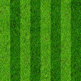 Grass field background Stock Images