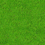 Grass field background Royalty Free Stock Photos