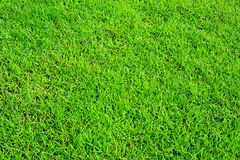 Grass field background Royalty Free Stock Image