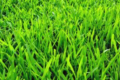 Grass field background Stock Image