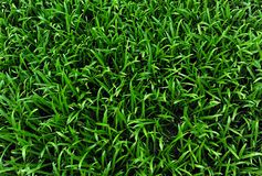 Grass field background Stock Photos