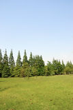 Grass field background. With trees Stock Image