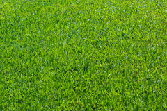 Grass field. Background,Backdrop and  pattern of grass field Stock Photos