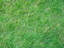 Grass field background. Green grass field space background Royalty Free Stock Photos