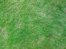 Grass field background. Green grass field space background Royalty Free Stock Photography