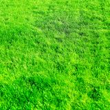 Grass field background, perfect backyard lawn. Nature, garden and golf landscape concept - Grass field background, perfect backyard lawn royalty free stock photos