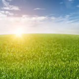 Grass Field Background Royalty Free Stock Photography