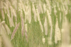 Grass in the field. Beautiful grass in the field Royalty Free Stock Images