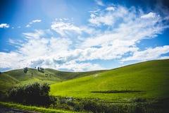 Grass. Field. Stock Photos