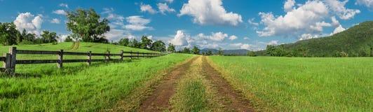 Grass field. Stock Photo
