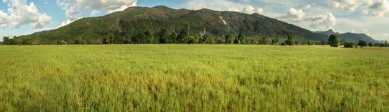 Grass field. Stock Photos