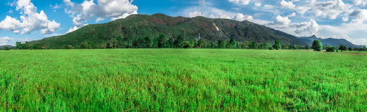 Grass field. Beautiful landscape of natural green grass field in front of big mountain in sunny day Royalty Free Stock Photos