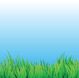 Grass field with blue sky Royalty Free Stock Photo