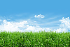 Grass field with blue sky. And cloud Stock Images