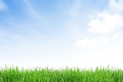 Grass field with blue sky Royalty Free Stock Images