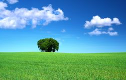 Grass field and a bunch of trees Stock Image