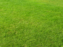 Grass field. Close up of green grass field Royalty Free Stock Photography