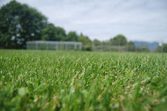 Grass field closeup green. A grass field with a narrow line of focus, baseball diamond in the background Stock Images