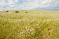 Grass field with clouds overhead. Golden green grass field with white clouds and blue skies overhead Stock Images