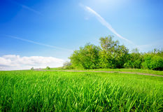 Grass in field Royalty Free Stock Photography