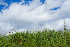 Grass field in countryside in Val Trebbia, Piacenza, Italy Stock Photography