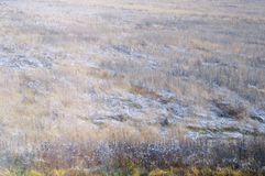 Grass in field covered with frost. Autumn background. Royalty Free Stock Photo