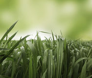Grass field with dew drops Stock Photos