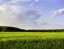 Grass field and dramatic sky at sunset Royalty Free Stock Image