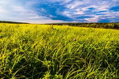 Grass field and dramatic sky at sunset Stock Photos