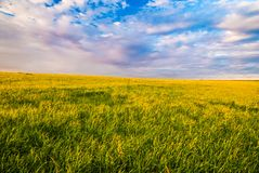 Grass field and dramatic sky at sunset Royalty Free Stock Images