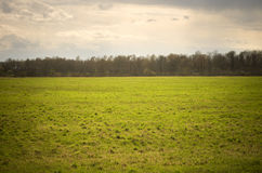 Grass field in early spring evening Stock Image