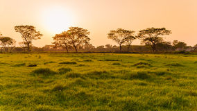 Grass field. A grass field in evening Stock Photos