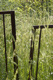 Grass field with fence Stock Images